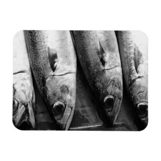 Fish closeup in black and white rectangular photo magnet