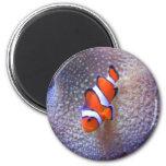 fish,clown fish 2 inch round magnet