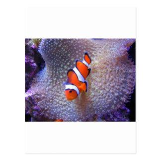 fish,clown fish postcard