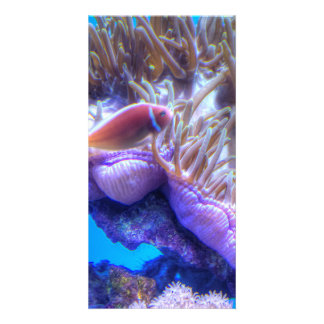 Fish Coral House Photo Card Template