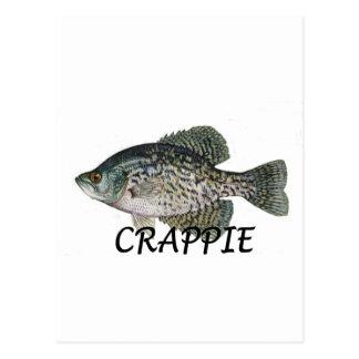 fish crappie postcard