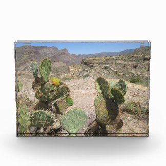 Fish Creek Hill Vista Prickly Cactus Award