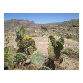 Fish Creek Hill Vista Prickly Cactus Postcard