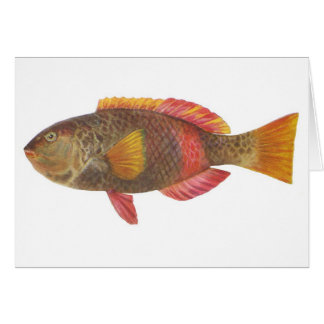 Fish - Crimson-Banded Parrot Fish Card