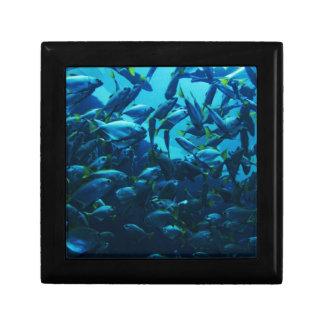 Fish Crowd Gift Box