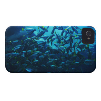 Fish Crowd iPhone 4 Covers