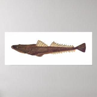 Fish - Dusky Flathead - Platycephalus fuscus Poster