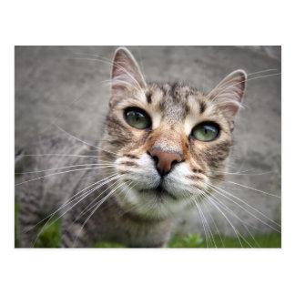 fish-eye cat postcard
