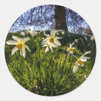 Fish Eye Daffodil Landscape Classic Round Sticker