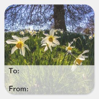 Fish Eye Daffodil Landscape Square Sticker