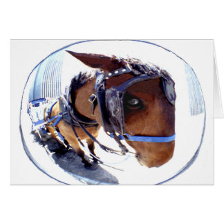 Fish-Eye Horse and Carriage Card