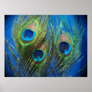 Fish Eye Peacock Still Life Poster