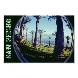 Fish Eye San Pedro Palm Trees Coastline Poster