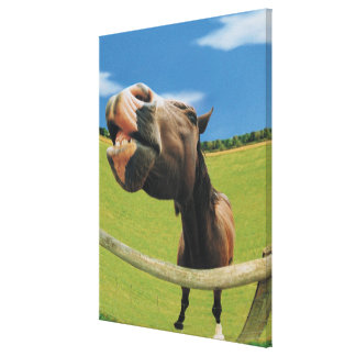 Fish-eye View of Horse Stretched Canvas Print
