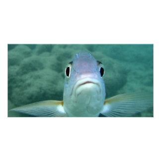 Fish Face Photo Card