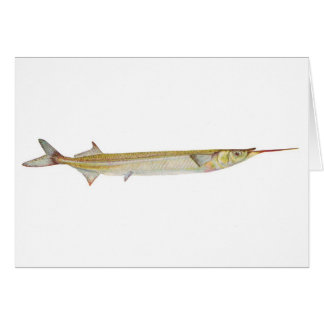 Fish - Garfish - Hyporhamphus intermedius Card