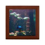 Fish in Aquarium Jewelry Box