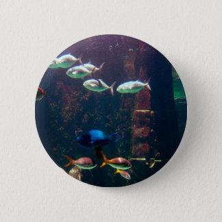 Fish in Aquarium Pinback Button