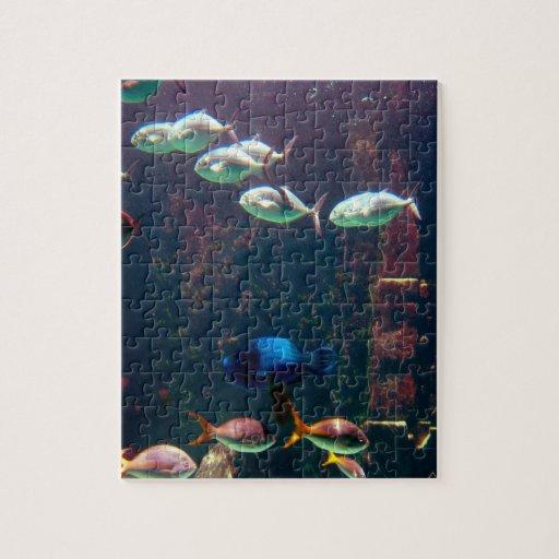 Fish in Aquarium Puzzles