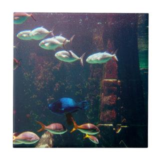 Fish in Aquarium Tile