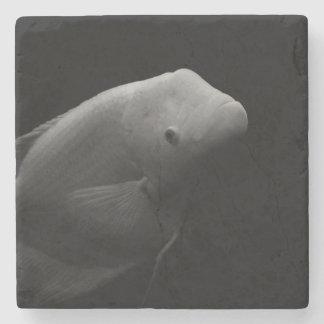 Fish in Tank Stone Coaster
