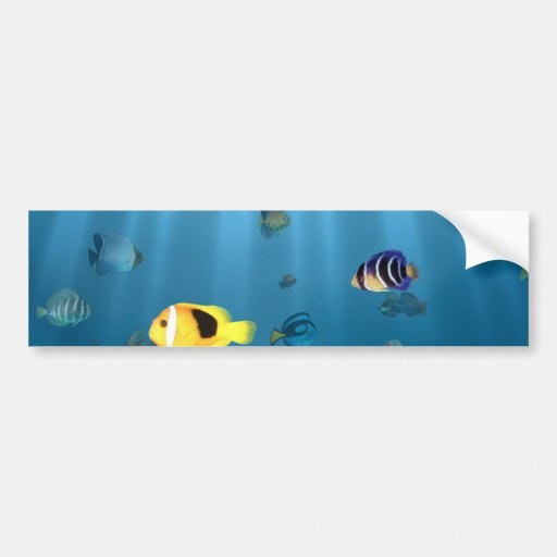 Fish In The Ocean Bumper Stickers