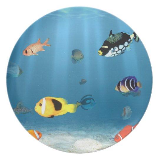 Fish In The Ocean Plate