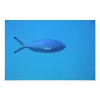 Fish in the sea photo art