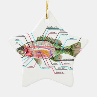 Fish internal organs Vector Art diagram Anatomy Ceramic Ornament