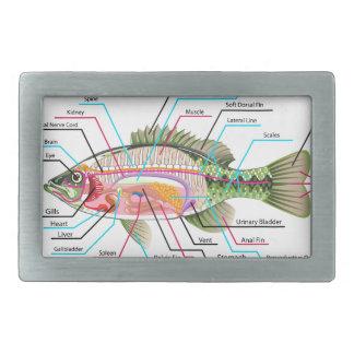 Fish internal organs Vector Art diagram Anatomy Rectangular Belt Buckle