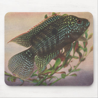Fish - Jack Dempsey - Archocentrus octofasciatus Mouse Pad