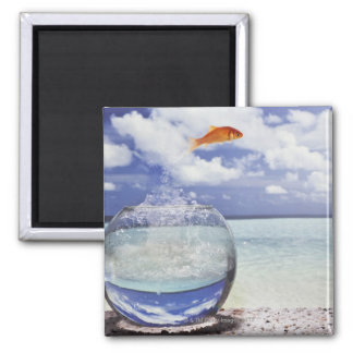 Fish jumping from fish tank 2 inch square magnet