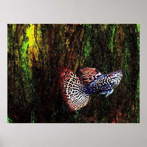 Fish Kingdom Colors Poster