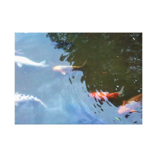 Fish, Koi Carps in pond Stretched Canvas Print