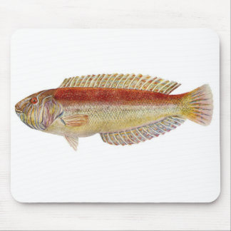 Fish - Maori Wrasse - Ophthalmolepis lineolatus Mouse Pad