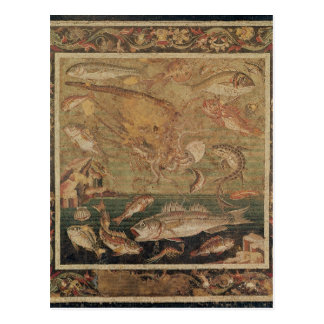 Fish, Molluscs and Crustacea Postcard