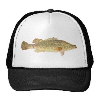 Fish - Murray Cod - Maccullochella macquariensis Hat