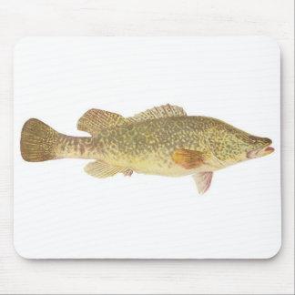 Fish - Murray Cod - Maccullochella macquariensis Mouse Pad