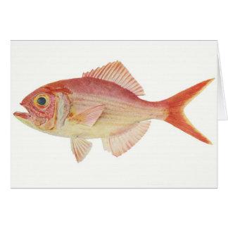 Fish - Nannygai - Trachichthodes affinis Card