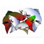 FISH_OF_COLOR POSTAL