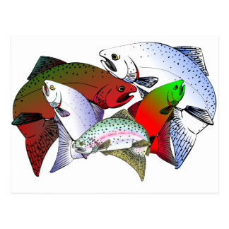 FISH_OF_COLOR POST CARDS