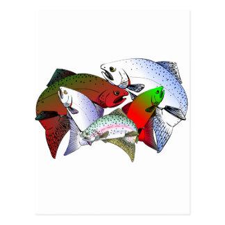 FISH_OF_COLOR POSTCARD