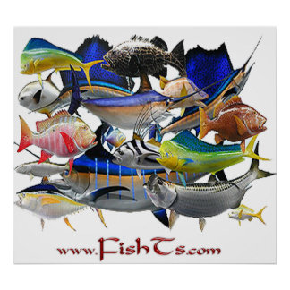 Fish of the Gulf-Huge Poster
