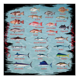 Fish of the Gulf Poster