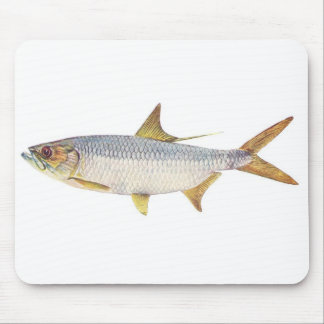 Fish - Ox-Eye Herring - Megalops cyprinoides Mouse Pad