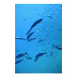 Fish Photo Art