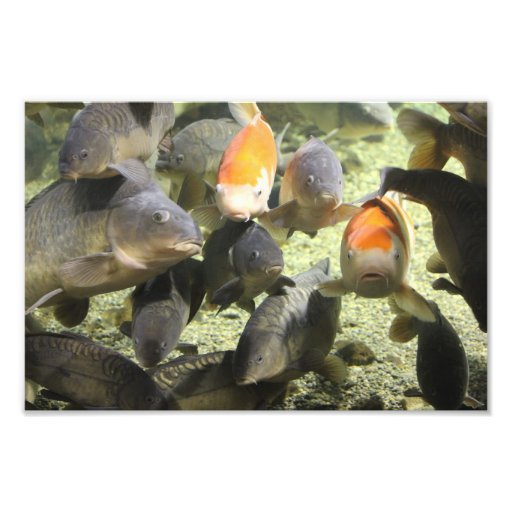 Fish photos photographic print