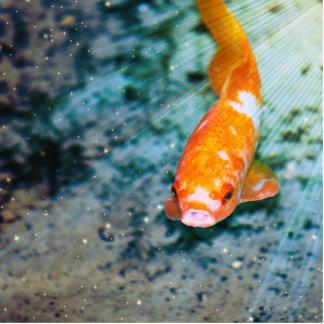 Fish Photo Sculpture Button