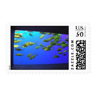 Fish Postage