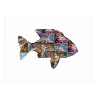 FISH POST CARD
